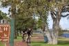 street-tree-riverside2